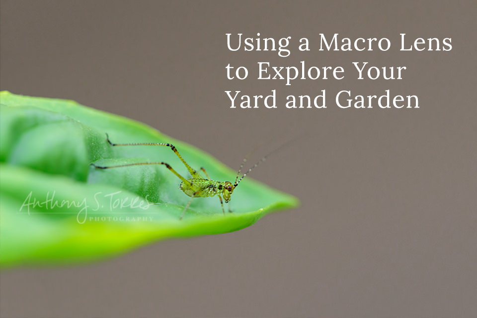 Using a Macro Lens to Explore Your Yard and Garden